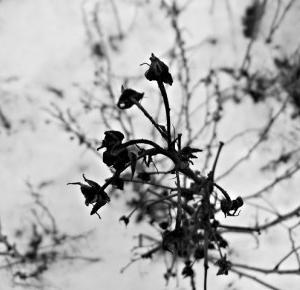Tuczarnia Motyli: Zimowe zdjęcia
