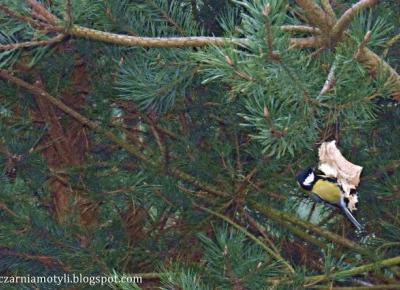 Tuczarnia Motyli: Ptaki i kwiaty