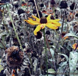 Tuczarnia Motyli: Jesienne zdjęcia
