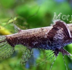 Interesujące zwierzęta: Motylowiec