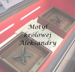 Interesujące zwierzęta: Motyl królowej Aleksandry